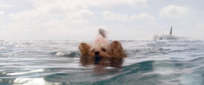 実在 メガロドン 実在した巨大ザメVSステイサム! リアルさに興奮の海洋パニック・アクション!<連載/ウワサの映画