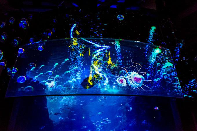 """世界初!3Dで体験する""""夜の水族館"""" 新江ノ島水族館で「ナイトアクアリウム」開催"""