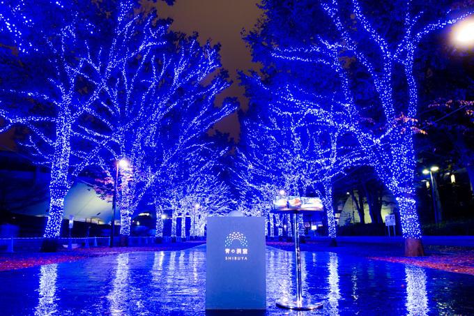 青の洞窟イルミネーションが渋谷で復活!渋谷公園通りから代々木公園ケヤキ並木まで青の空間に