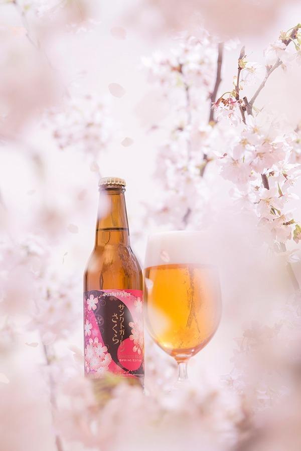 """桜が香るビール「サンクトガーレン さくら」八重桜の花と葉を使用した""""桜餅""""風味"""