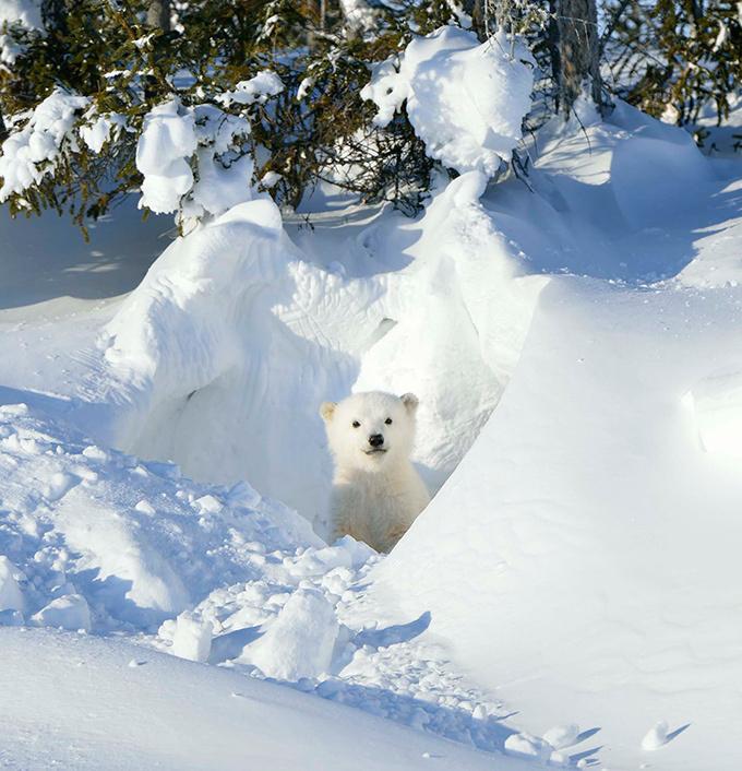 書籍『北極スマイル・南極スマイル』- ホッキョクグマ、エンペラーペンギンなどの可愛らしい姿