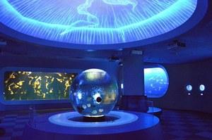 「新江ノ島水族館 クラゲ」の画像検索結果