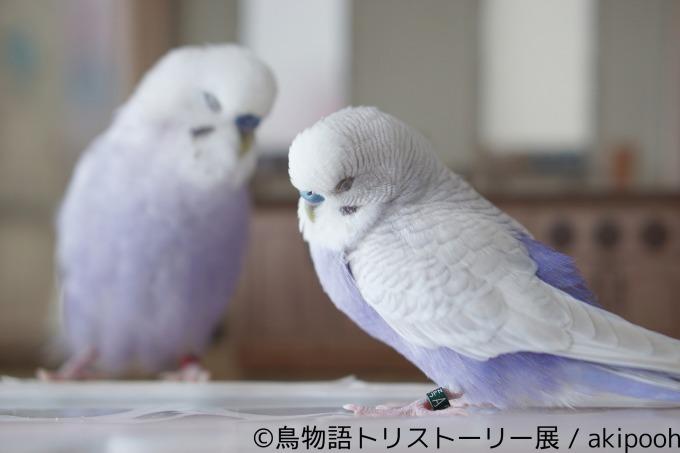 街中でよく見る鳥の種類図鑑!白黒、小鳥…アイツ …