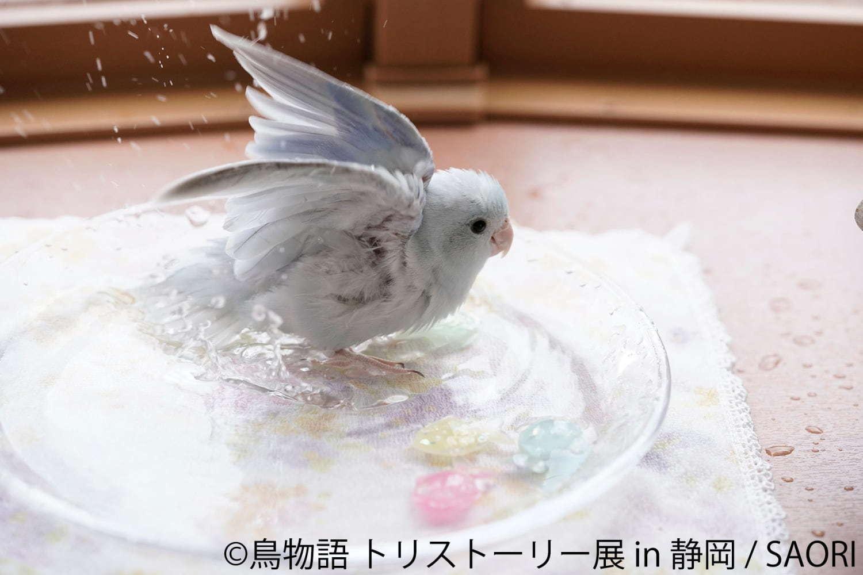 """鳥物語トリストーリー展 in 静岡」""""一瞬の美しさ""""を切り取った鳥の合同 ..."""