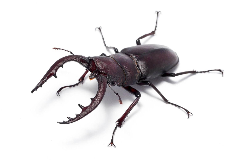 長居 昆虫