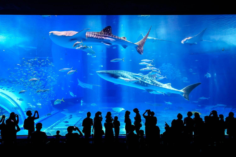 国営沖縄記念公園(海洋博公園):沖縄美ら海水族館