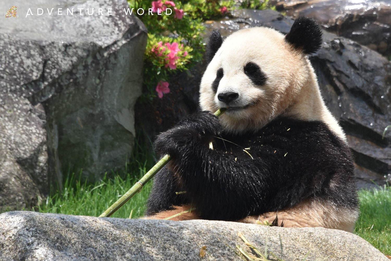 写真4 27 南紀白浜 アドベンチャーワールド パンダ家族のいる動物園