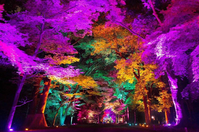 呼応する木々 / Resonating Trees teamLab, 2014, Interactive Digitized Nature, Sound: Hideaki Takahashi