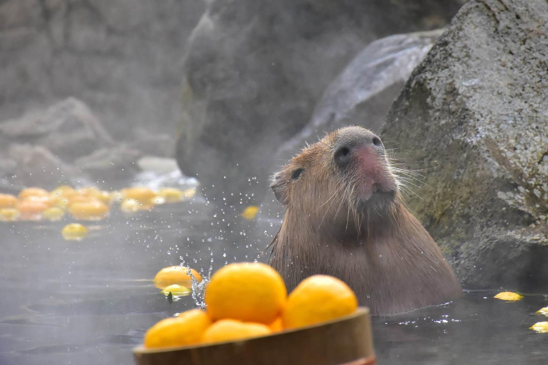 動物 伊豆 公園 シャボテン